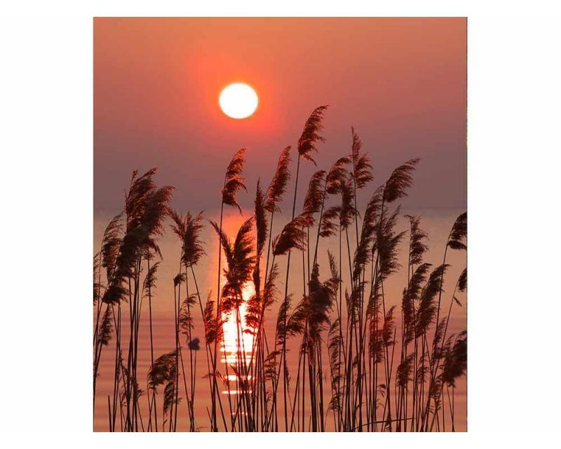 Vliesové fototapety na zeď Rákos na jezeře | MS-3-0089 | 225x250 cm - Fototapety vliesové