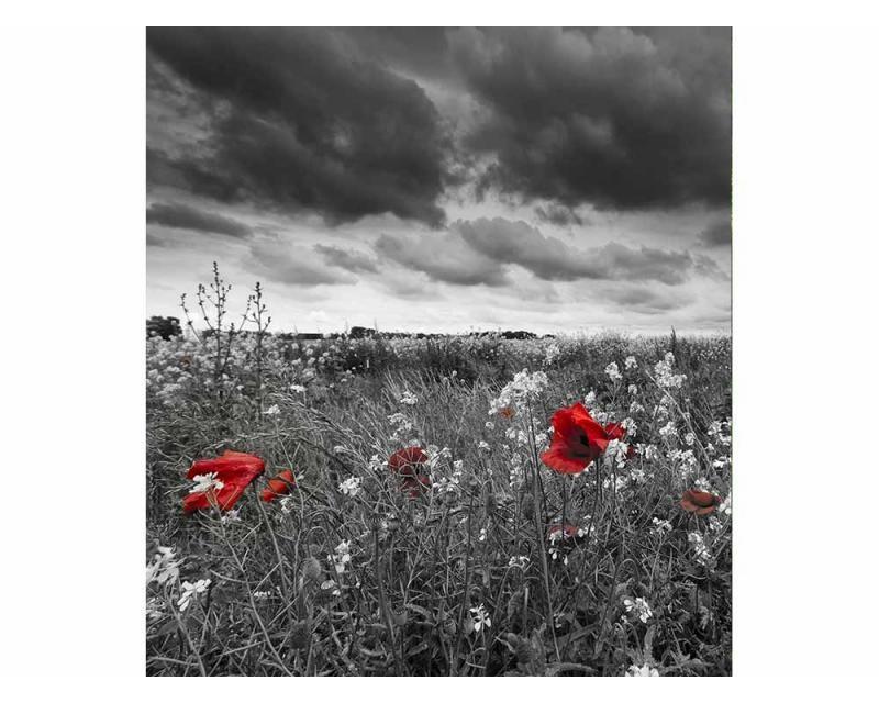 Vliesové fototapety na zeď Černobílé vlčí máky | MS-3-0091 | 225x250 cm - Fototapety vliesové