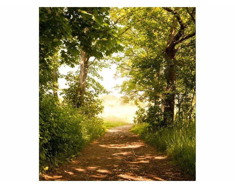Vliesové fototapety na zeď Lesní cesta | MS-3-0093 | 225x250 cm - Fototapety vliesové