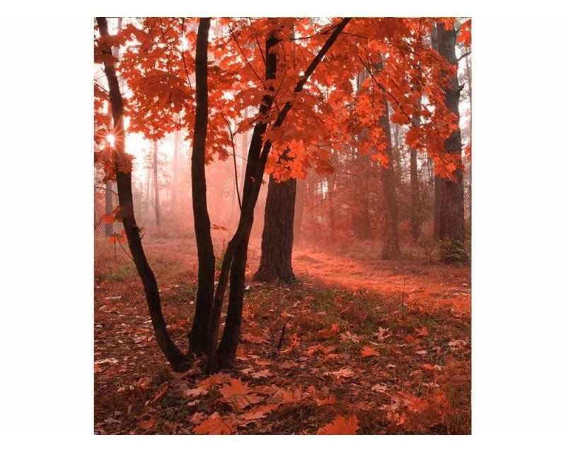 Vliesové fototapety na zeď Les v mlze | MS-3-0095 | 225x250 cm - Fototapety vliesové
