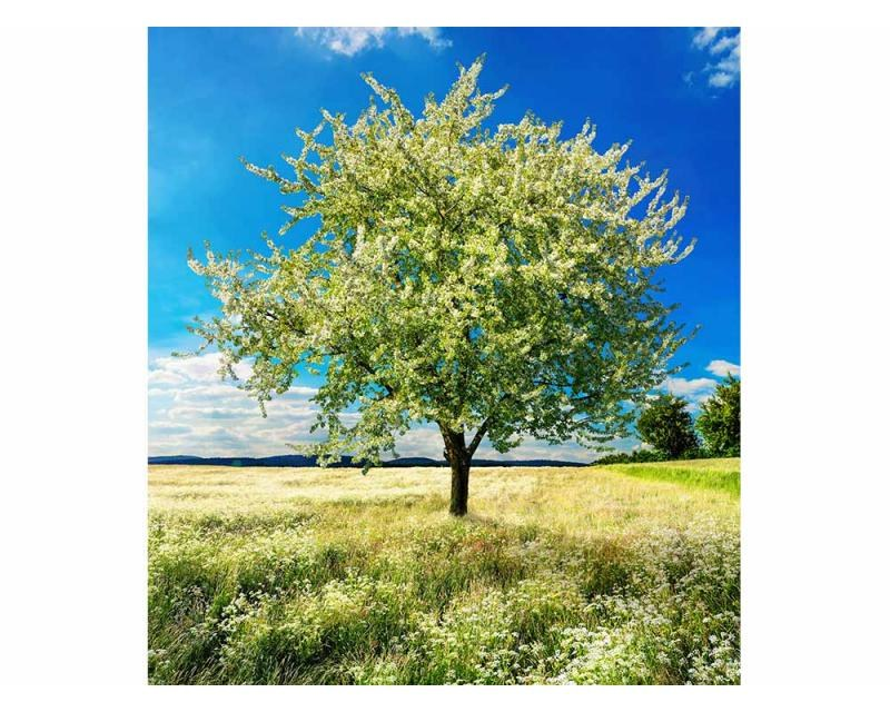 Vliesové fototapety na zeď Strom na louce | MS-3-0096 | 225x250 cm - Fototapety vliesové