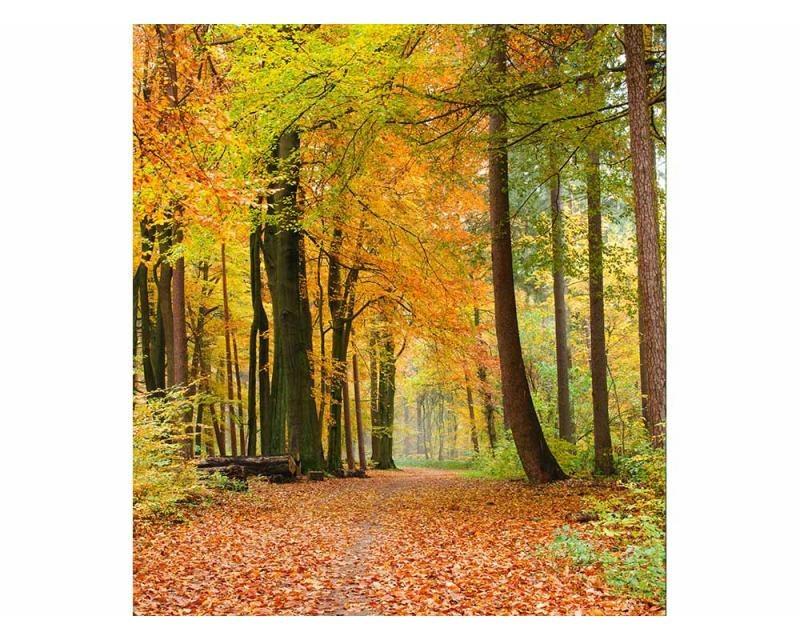 Vliesové fototapety na zeď Podzimní les | MS-3-0099 | 225x250 cm - Fototapety vliesové