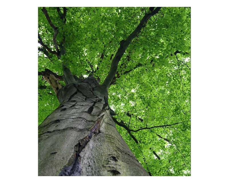 Vliesové fototapety na zeď Koruna stromu | MS-3-0101 | 225x250 cm - Fototapety vliesové