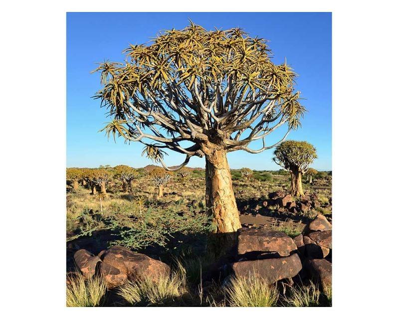 Vliesové fototapety na zeď Namibie | MS-3-0103 | 225x250 cm - Fototapety vliesové