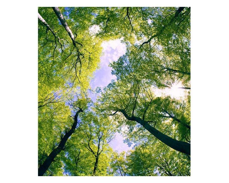 Vliesové fototapety na zeď Stromy v oblacích | MS-3-0104 | 225x250 cm - Fototapety vliesové