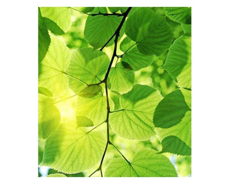 Vliesové fototapety na zeď Zelené listy | MS-3-0107 | 225x250 cm - Fototapety vliesové