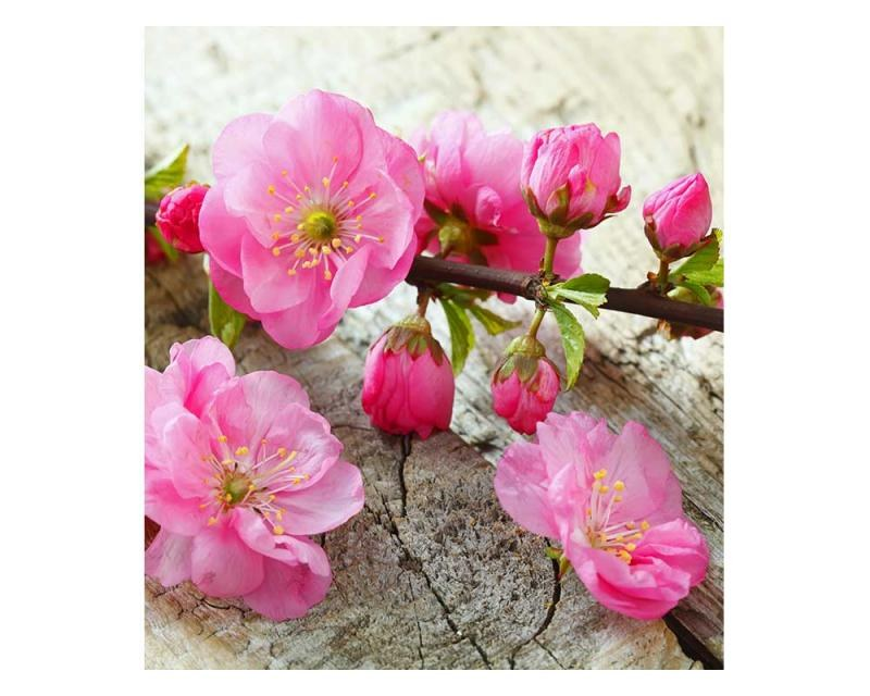 Vliesové fototapety na zeď Sakura | MS-3-0109 | 225x250 cm - Fototapety vliesové