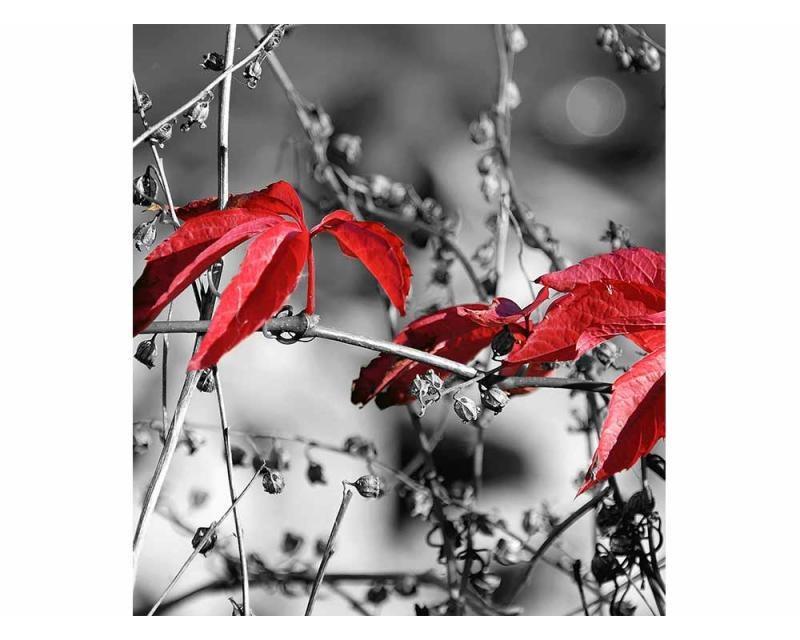 Vliesové fototapety na zeď červené listí na černém pozadí | MS-3-0110 | 225x250 cm - Fototapety vliesové