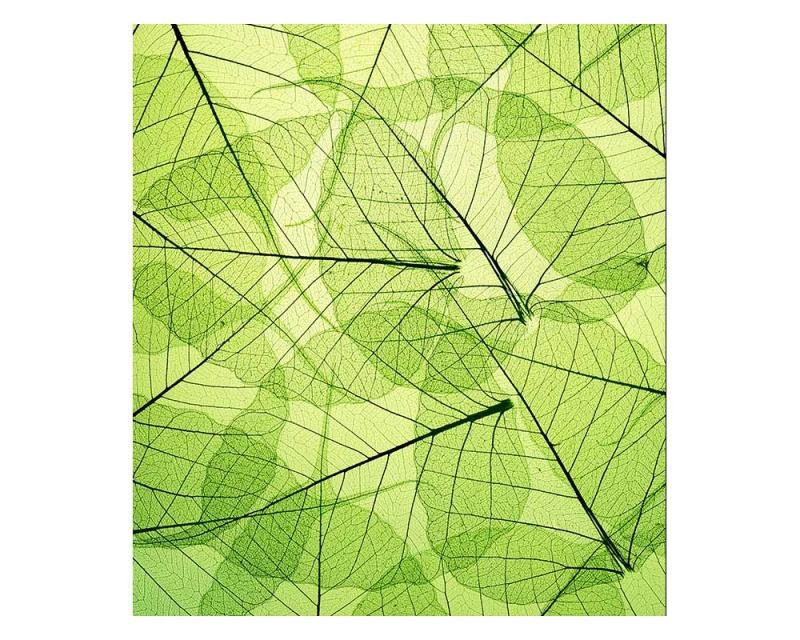 Vliesové fototapety na zeď Žilky listů | MS-3-0111 | 225x250 cm - Fototapety vliesové