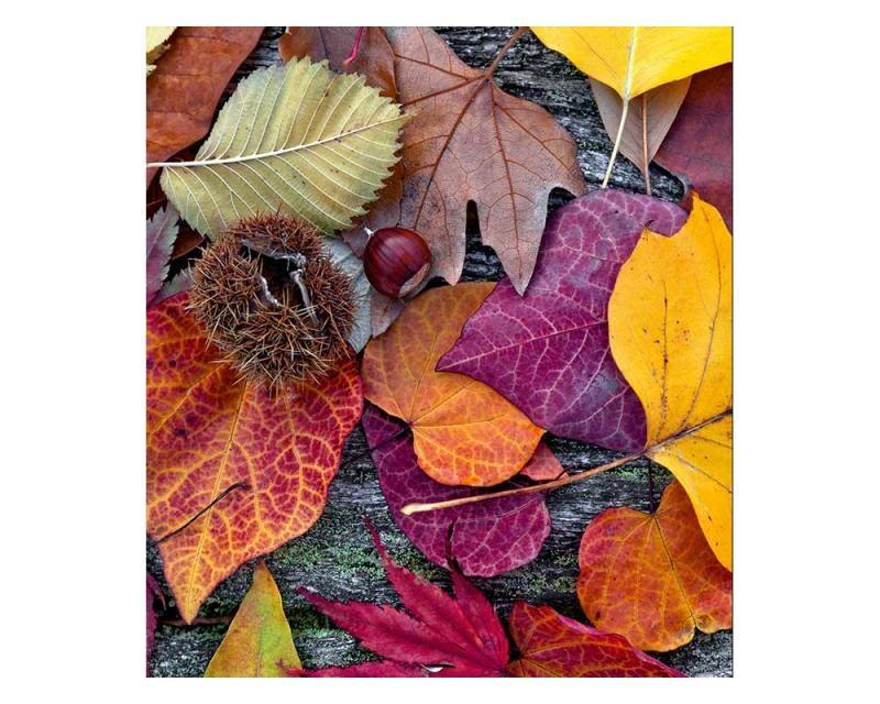 Vliesové fototapety na zeď Podzimní listí | MS-3-0112 | 225x250 cm - Fototapety vliesové