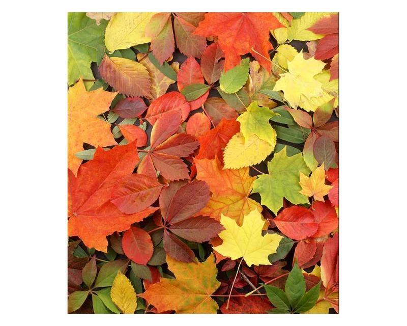 Vliesové fototapety na zeď Pestrobarevné listí | MS-3-0115 | 225x250 cm - Fototapety vliesové