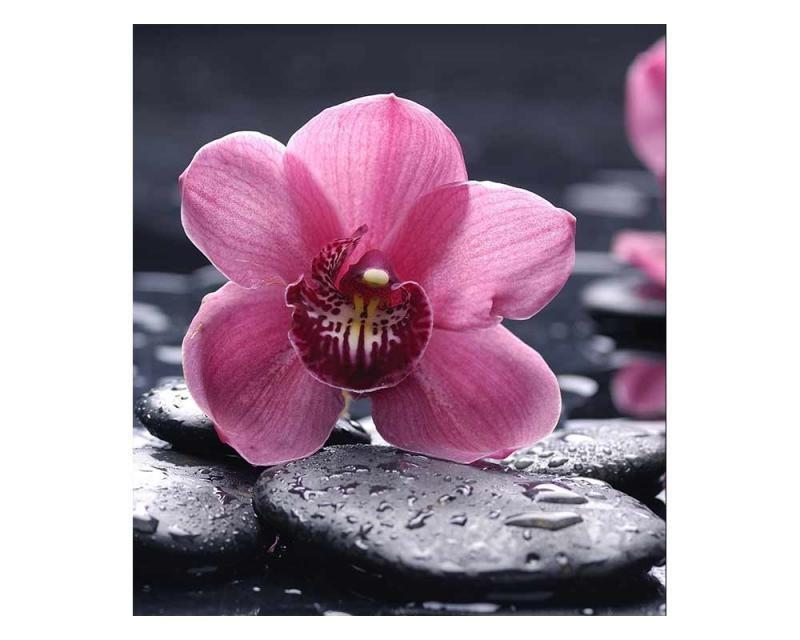 Vliesové fototapety na zeď Orchidej | MS-3-0120 | 225x250 cm - Fototapety vliesové