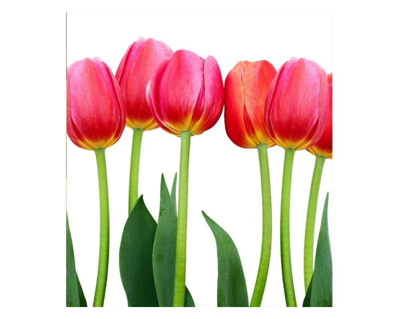 Vliesové fototapety na zeď Tulipány | MS-3-0126 | 225x250 cm - Fototapety vliesové