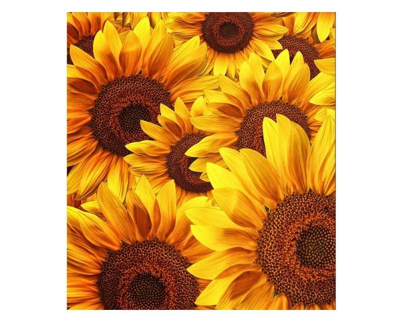 Vliesové fototapety na zeď Lán slunečnic | MS-3-0129 | 225x250 cm - Fototapety vliesové