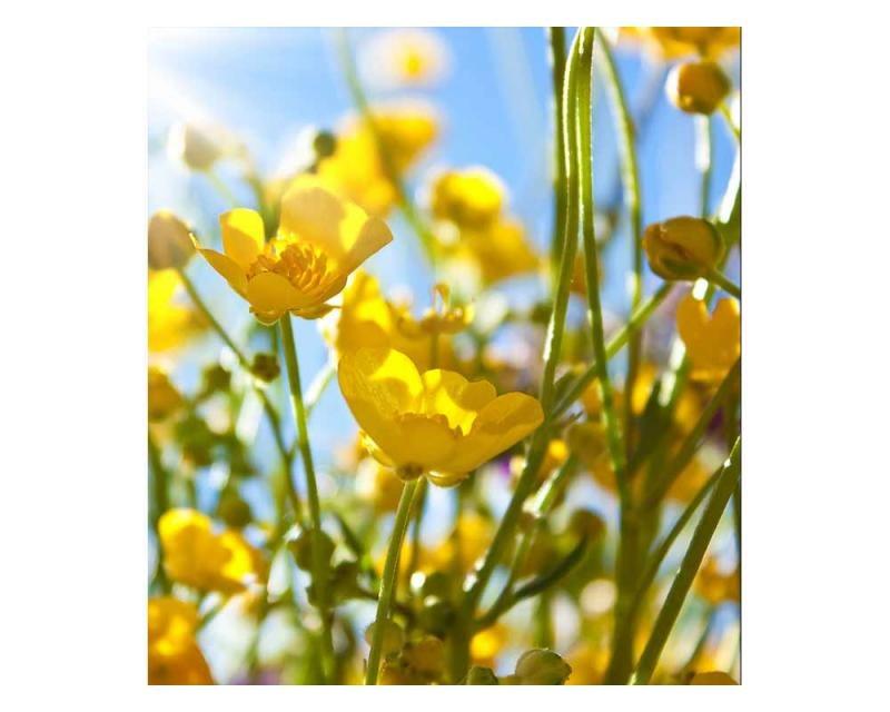 Vliesové fototapety na zeď Žluté květiny | MS-3-0134 | 225x250 cm - Fototapety vliesové