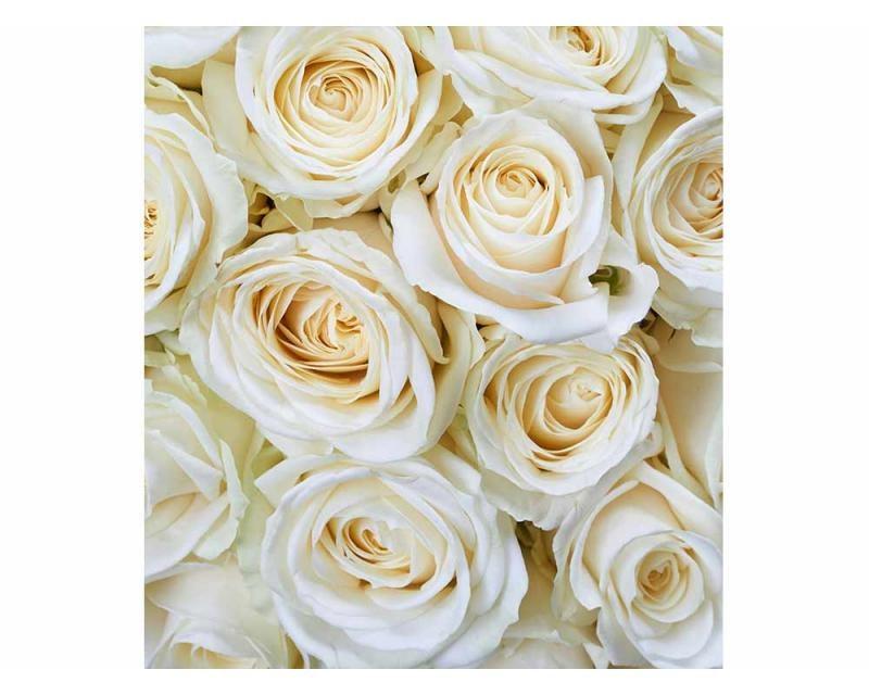 Vliesové fototapety na zeď Bílé růže | MS-3-0137 | 225x250 cm - Fototapety vliesové