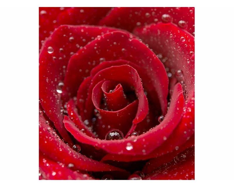 Vliesové fototapety na zeď Červená růže | MS-3-0138 | 225x250 cm - Fototapety vliesové