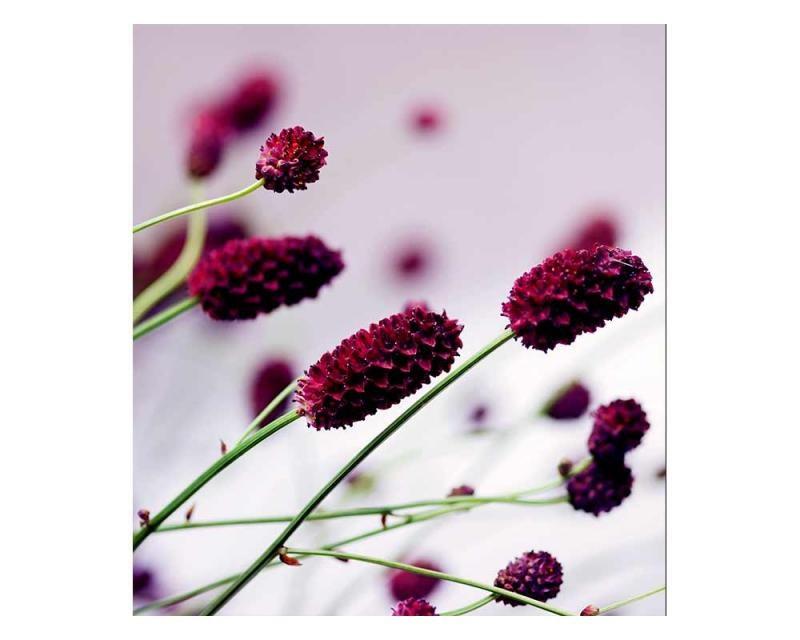 Vliesové fototapety na zeď Fialová květina | MS-3-0141 | 225x250 cm - Fototapety vliesové