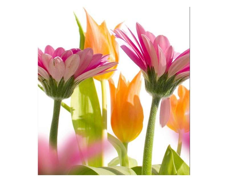 Vliesové fototapety na zeď Jarní květiny | MS-3-0142 | 225x250 cm - Fototapety vliesové