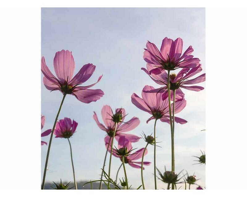 Vliesové fototapety na zeď Květiny | MS-3-0145 | 225x250 cm - Fototapety vliesové