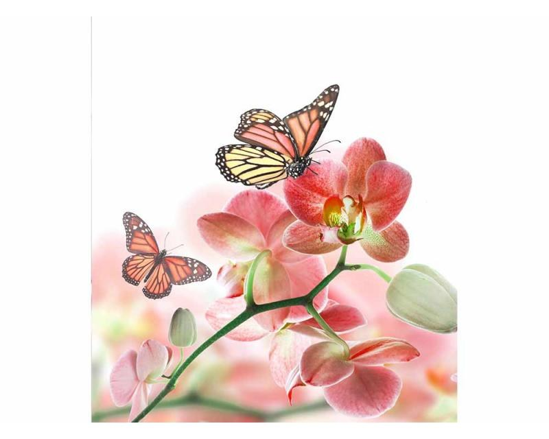 Vliesové fototapety na zeď Motýli a orchideje | MS-3-0146 | 225x250 cm - Fototapety vliesové