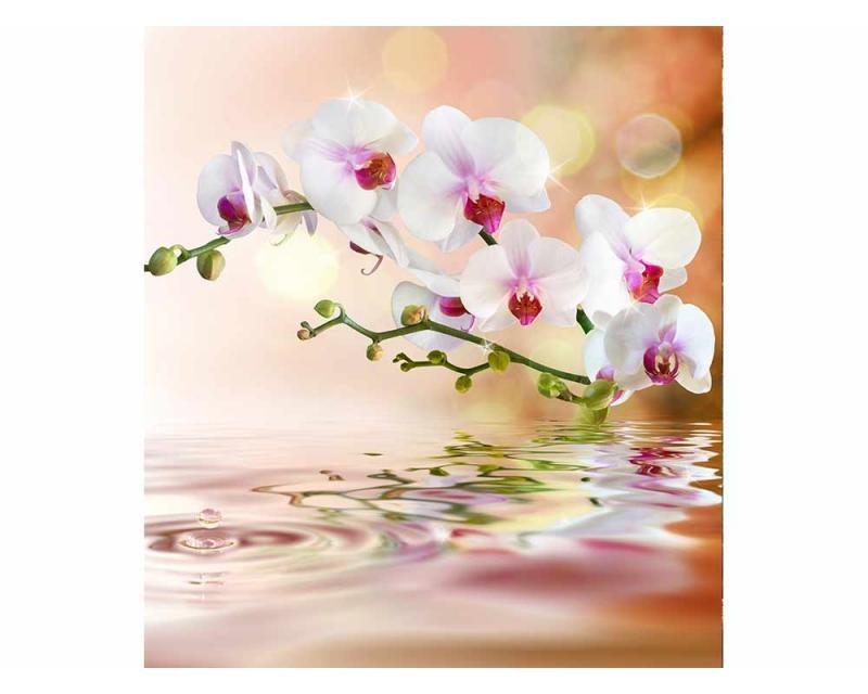 Vliesové fototapety na zeď Bílá orchidej | MS-3-0147 | 225x250 cm - Fototapety vliesové