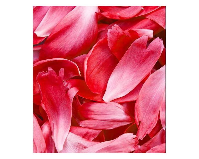 Vliesové fototapety na zeď Červené okvětní lístky | MS-3-0151 | 225x250 cm - Fototapety vliesové