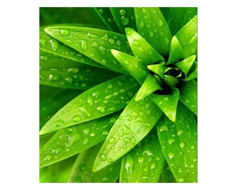Vliesové fototapety na zeď Čerstvé listy | MS-3-0153 | 225x250 cm - Fototapety vliesové