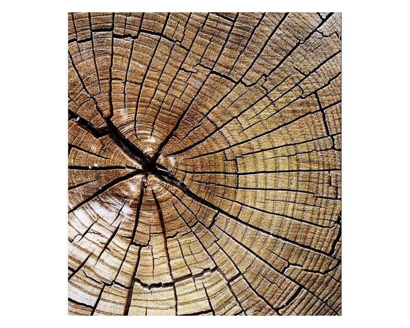 Vliesové fototapety na zeď Letokruhy | MS-3-0162 | 225x250 cm - Fototapety vliesové