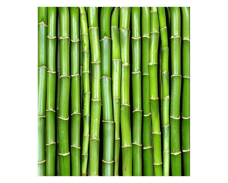 Vliesové fototapety na zeď Bambus | MS-3-0165 | 225x250 cm - Fototapety vliesové