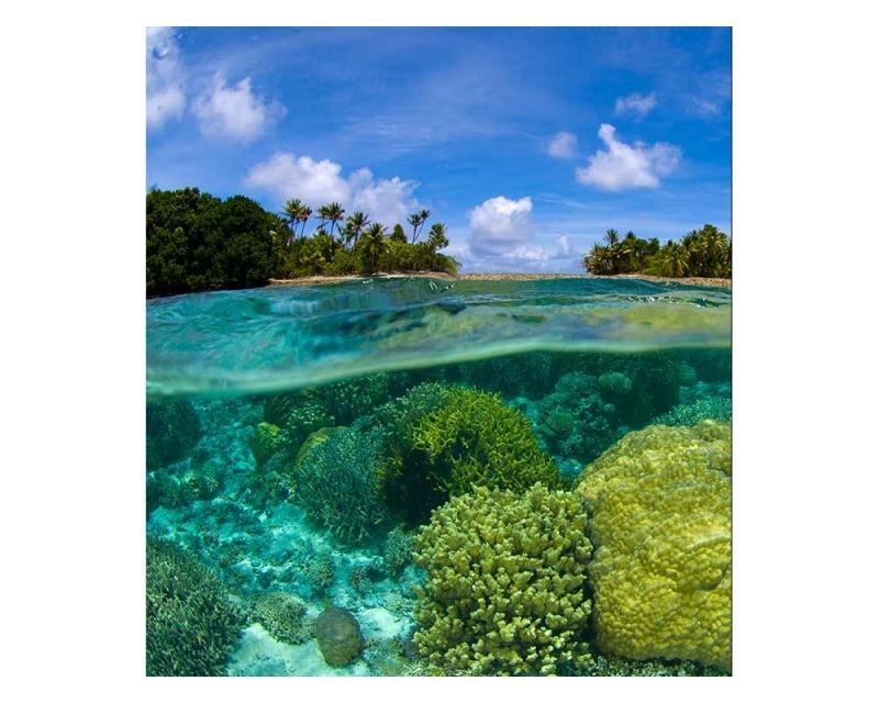 Vliesové fototapety na zeď Korálový útes | MS-3-0200 | 225x250 cm - Fototapety vliesové