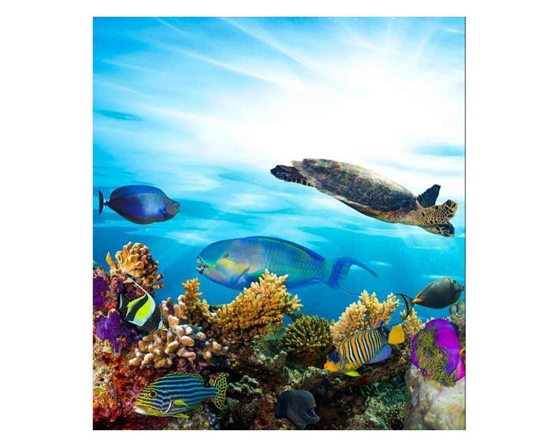 Vliesové fototapety na zeď Ryby v oceánu | MS-3-0216 | 225x250 cm - Fototapety vliesové