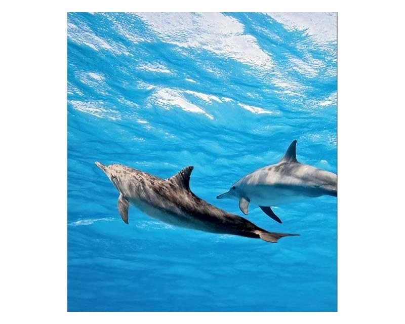 Vliesové fototapety na zeď Delfíni | MS-3-0218 | 225x250 cm - Fototapety vliesové