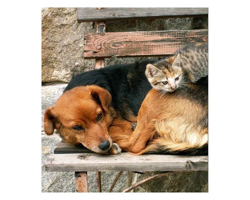Vliesové fototapety na zeď Kočka a pes | MS-3-0221 | 225x250 cm - Fototapety vliesové