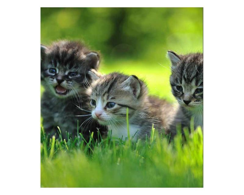 Vliesové fototapety na zeď Koťata | MS-3-0222 | 225x250 cm - Fototapety vliesové