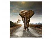 Vliesové fototapety na zeď Kráčející slon | MS-3-0225 | 225x250 cm Fototapety vliesové