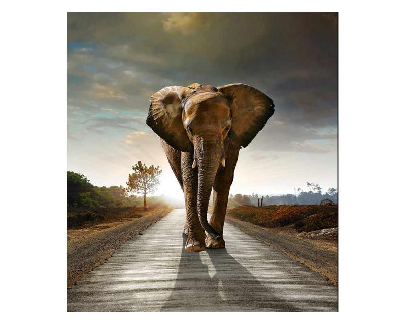 Vliesové fototapety na zeď Kráčející slon | MS-3-0225 | 225x250 cm - Fototapety vliesové