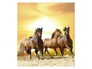 Vliesové fototapety na zeď Koně při západu slunce | MS-3-0227 | 225x250 cm Fototapety vliesové