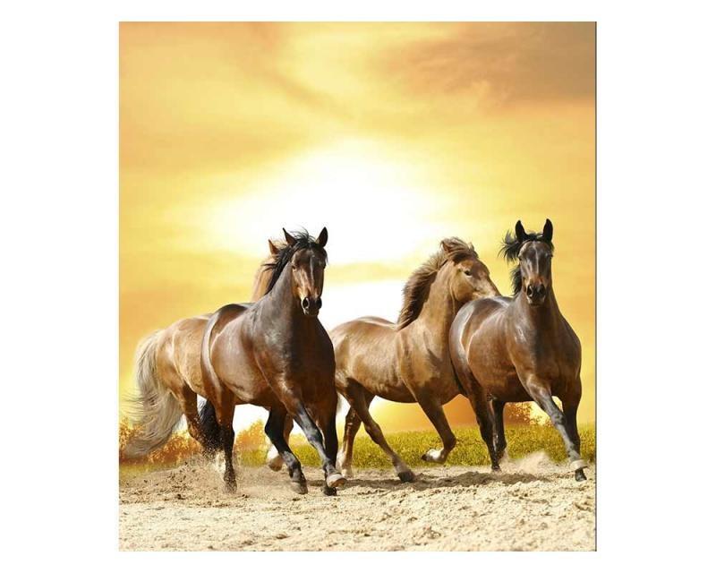 Vliesové fototapety na zeď Koně při západu slunce | MS-3-0227 | 225x250 cm - Fototapety vliesové