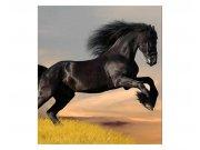 Vliesové fototapety na zeď Černý kůň | MS-3-0228 | 225x250 cm Fototapety vliesové