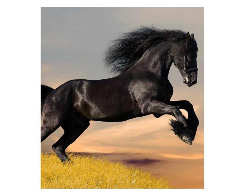 Vliesové fototapety na zeď Černý kůň | MS-3-0228 | 225x250 cm - Fototapety vliesové