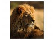 Vliesové fototapety na zeď Lev | MS-3-0231 | 225x250 cm Fototapety vliesové