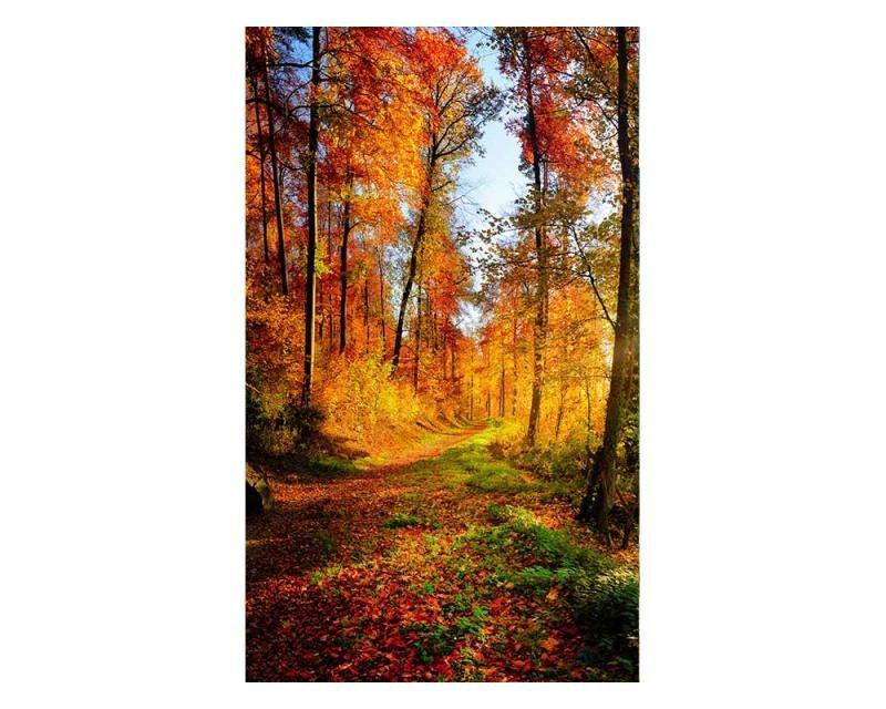 Vliesové fototapety na zeď Procházka lesem | MS-2-0065 | 150x250 cm - Fototapety vliesové