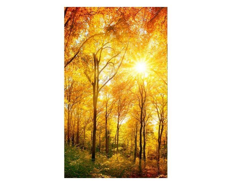 Vliesové fototapety na zeď Slunečný les | MS-2-0067 | 150x250 cm - Fototapety vliesové