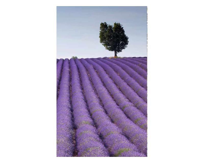 Vliesové fototapety na zeď Levandulové pole   MS-2-0088   150x250 cm - Fototapety vliesové