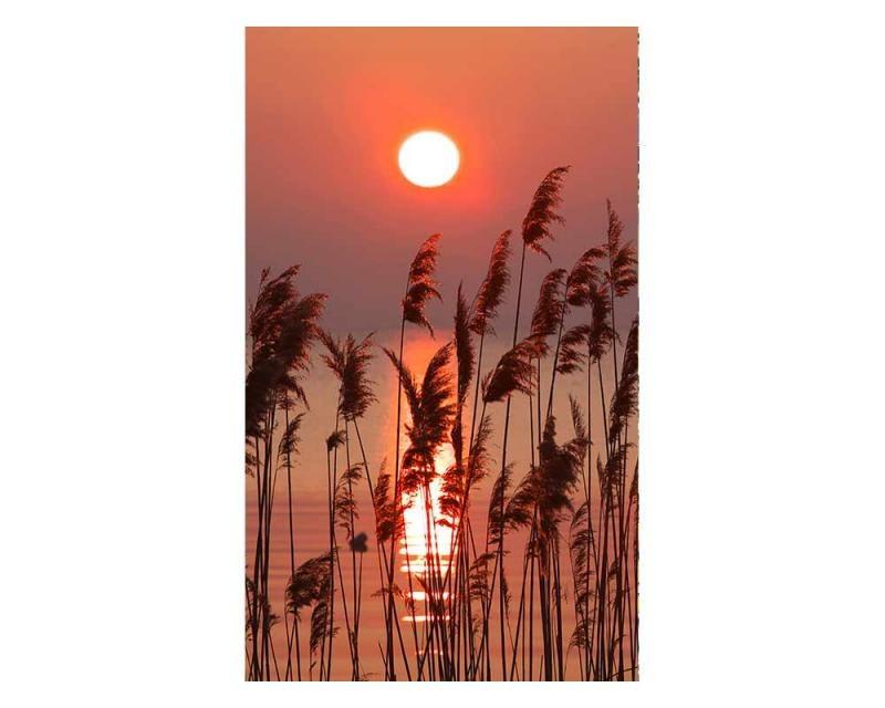 Vliesové fototapety na zeď Rákos na jezeře | MS-2-0089 | 150x250 cm - Fototapety vliesové