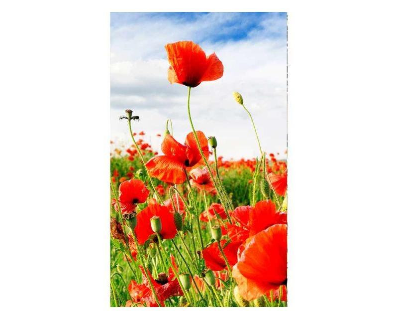 Vliesové fototapety na zeď Červený mák | MS-2-0090 | 150x250 cm - Fototapety vliesové