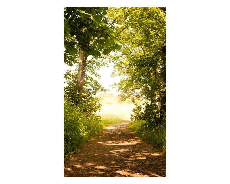 Vliesové fototapety na zeď Lesní cesta | MS-2-0093 | 150x250 cm - Fototapety vliesové