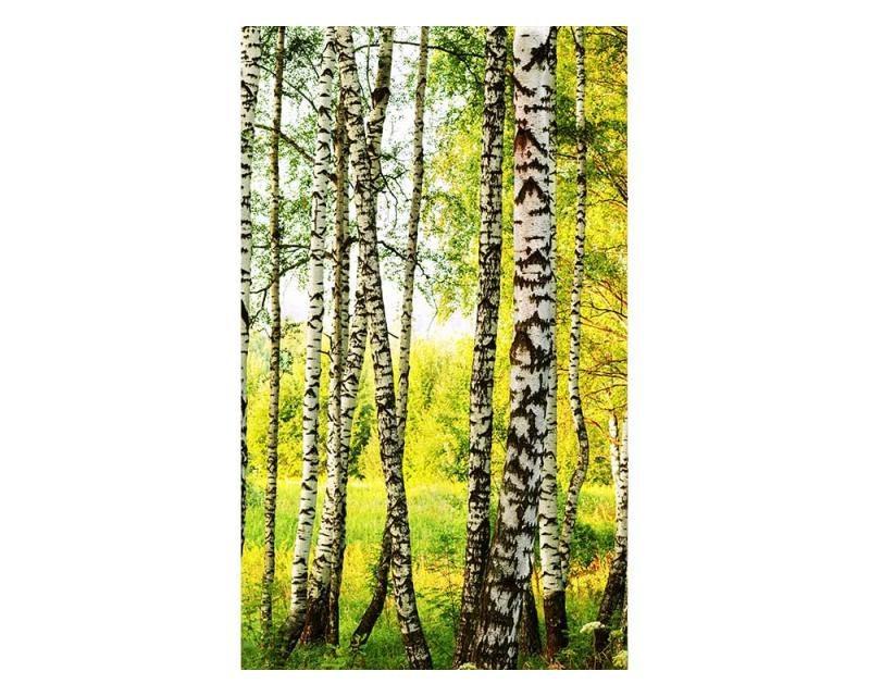 Vliesové fototapety na zeď Březový les | MS-2-0094 | 150x250 cm - Fototapety vliesové