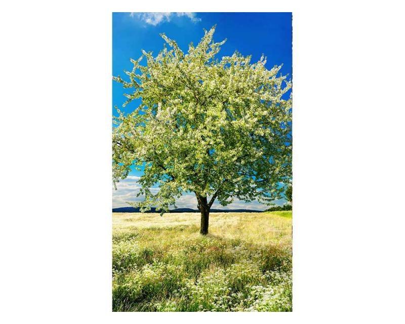 Vliesové fototapety na zeď Strom na louce | MS-2-0096 | 150x250 cm - Fototapety vliesové
